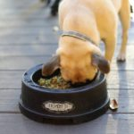 Dog Friendly Bars in Tampa