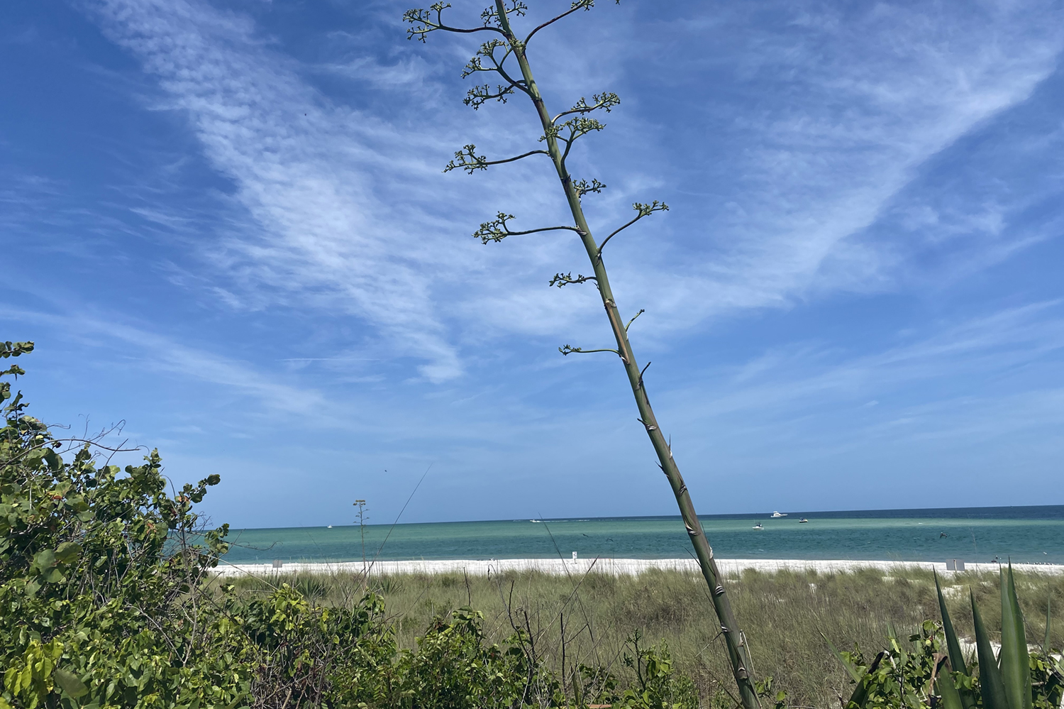 Sail Away to Egmont Key State Park for the Day