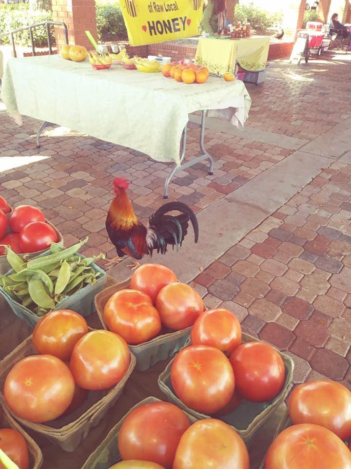 Rooster at Ybor City Saturday Market